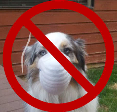 Dog wearing a protective dust mask.
